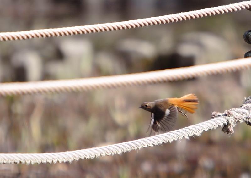つかさのブログ-鳥