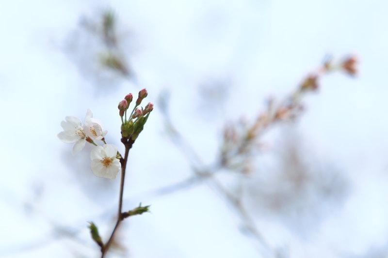 つかさのブログ-10花見