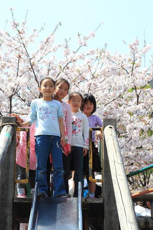 つかさのブログ-10桜祭り