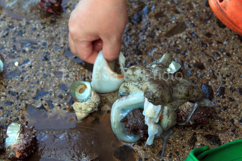 つかさのブログ-隠岐の島2010