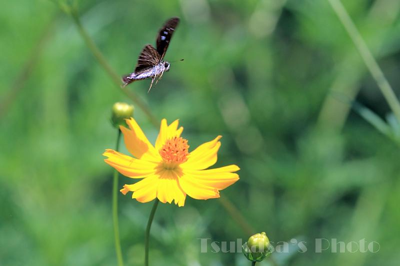 つかさのブログ-飛翔