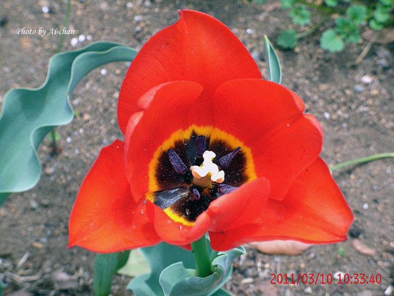 つかさのブログ-アイちゃんの春