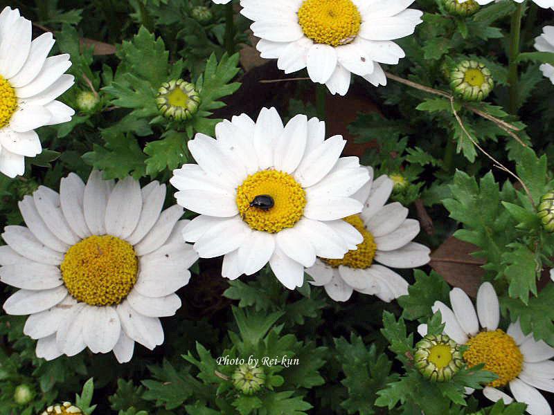 つかさのブログ-レイ君の春