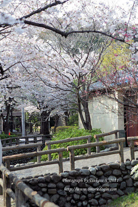 つかさのブログ-多摩川桜巡り
