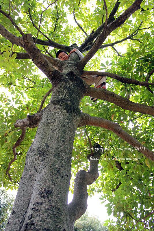 つかさのブログ-木登り