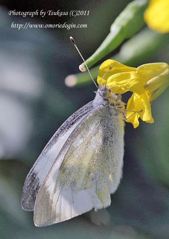 つかさのブログ-春の虫