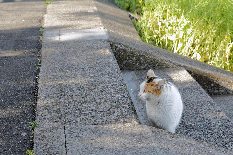 つかさのブログ-ネコ
