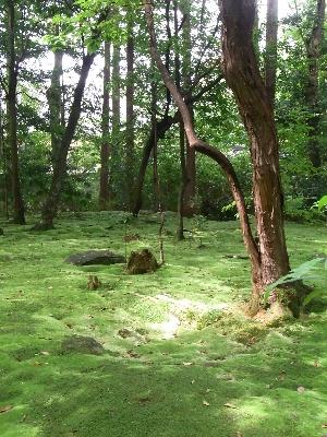 秋篠寺苔庭