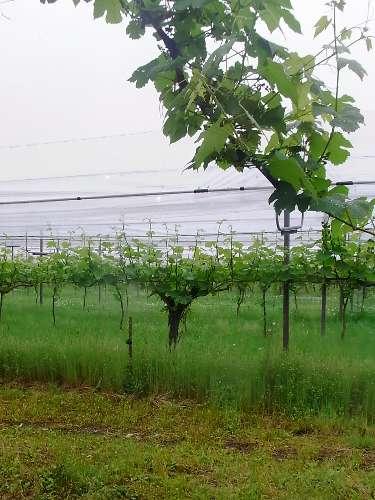 tamba winery