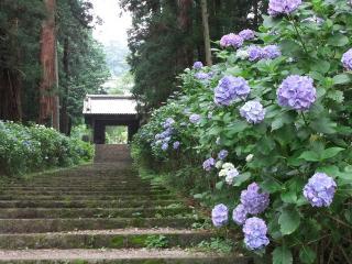 2010_0627ajisai0019.jpg
