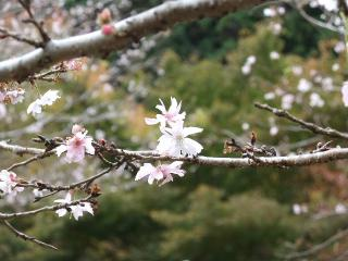 2010_1115houraisan0005.jpg