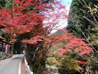 2010_1122kiryuu0026.jpg