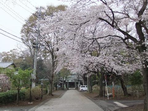 2011_0410sakura010002.jpg