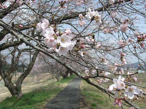 2011_0411kasuo0010.jpg