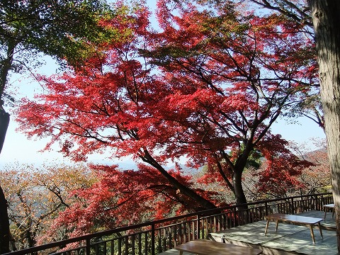 2011_1124hourai0008.jpg