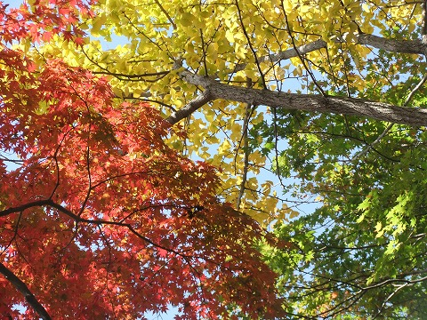 2011_1124hourai0015.jpg