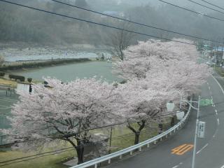 2012_0422kusatsu0004.jpg