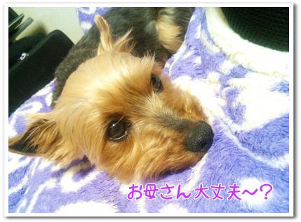yoshi.png
