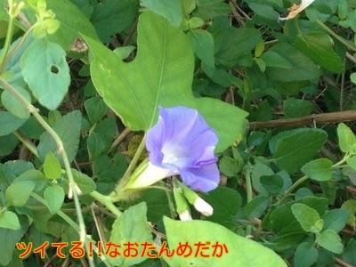 20141019203332e09.jpg