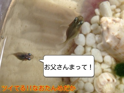 201411112122488c4.jpg