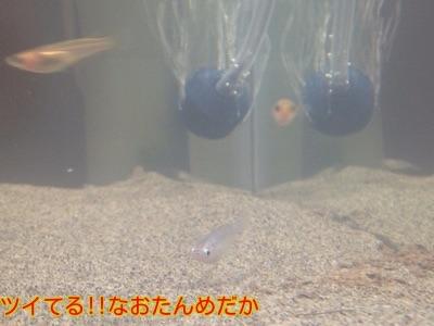 20141203202906f2a.jpg