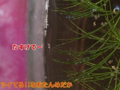 201412172032326be.jpg