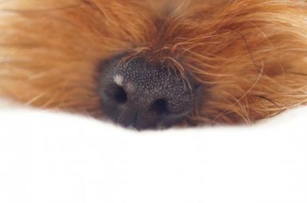 ツナの鼻2