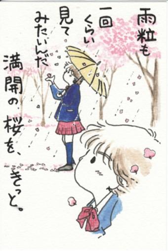 雨粒と桜 2