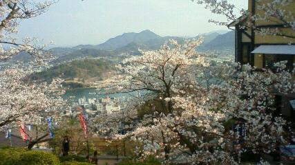 22.4.4 桜Ⅳ