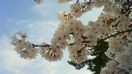 22.4.4 桜Ⅲ