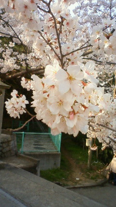 22.4.4 桜Ⅰ