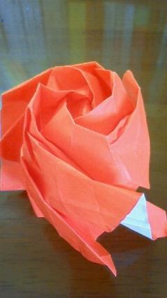 不可解な薔薇