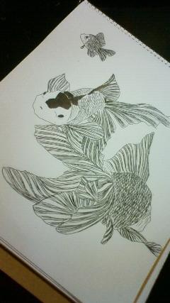 金魚 蝶尾