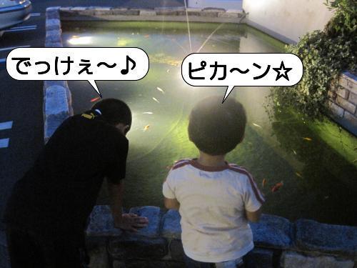 20100824_212355.jpg