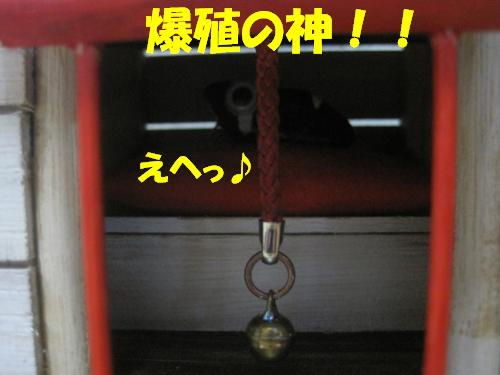 IMG_3657_convert_20111024235620.jpg