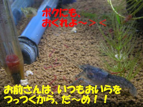 P1230129_convert_20120127233251.jpg