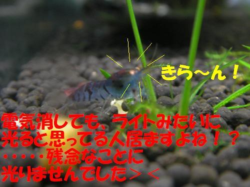 P1230131_convert_20120127233326.jpg