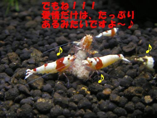 PA030140_convert_20111003010035.jpg