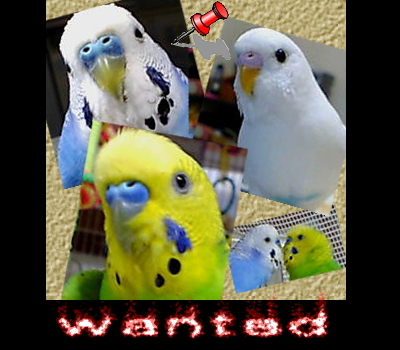 wanted1.jpg