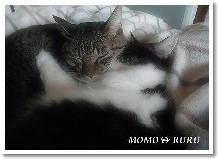MOMO&RURU