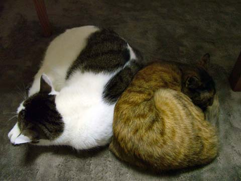 奇跡の猫団子、その一