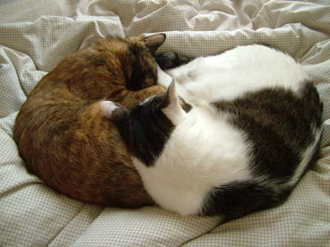 奇跡の猫団子、その二