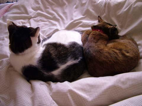 幸せの猫団子~^^