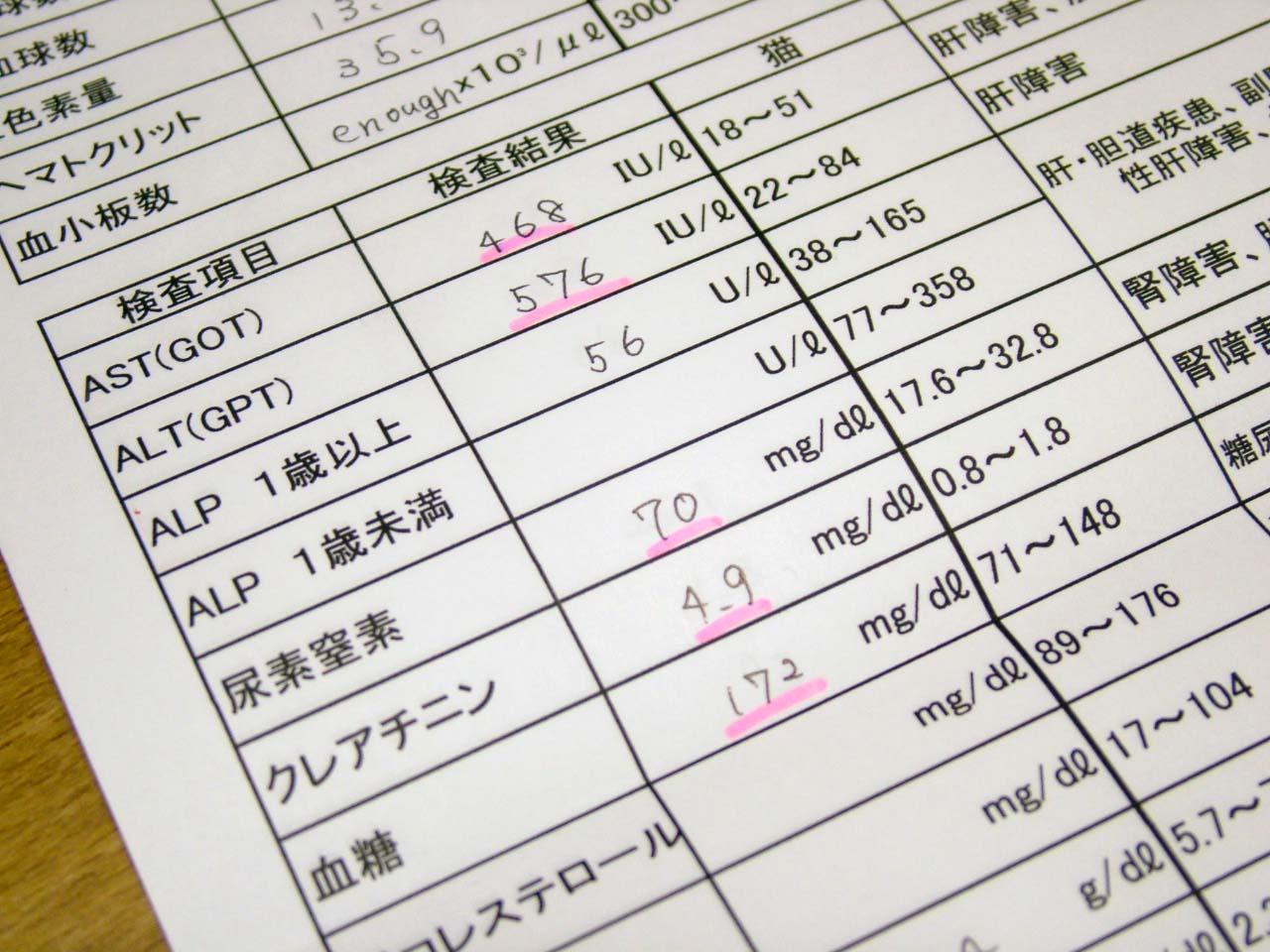 検査結果表1