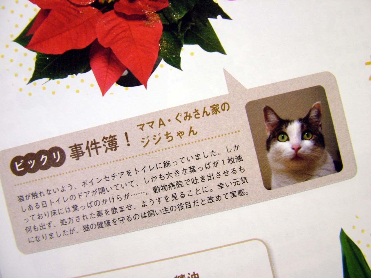 特集「猫に危ない植物図鑑」!!