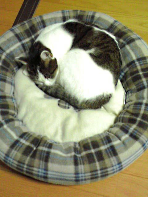 猫ならぬ、犬ベッド