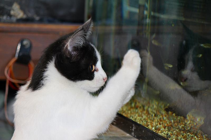 20131204猫と魚 (3)