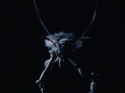 宇宙昆虫 ダイオリウス