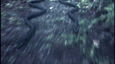 ツタは蛇になり、涼を追いかける