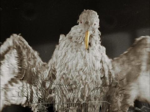 古代怪鳥 ラルゲユウス